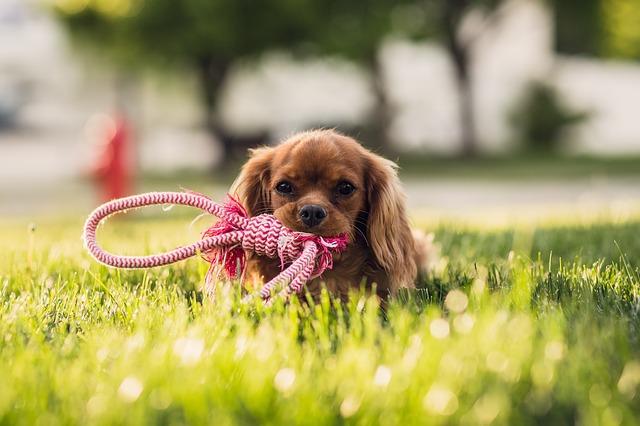 La scelta: dove abita un cane, erba sintetica con intaso